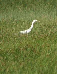 Bird Sightings List 2010