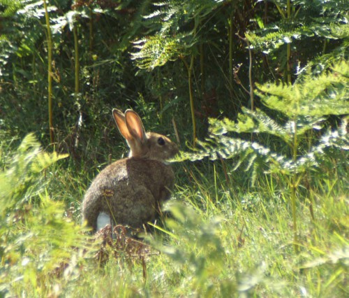 Grassland areas are grazed by rabbits
