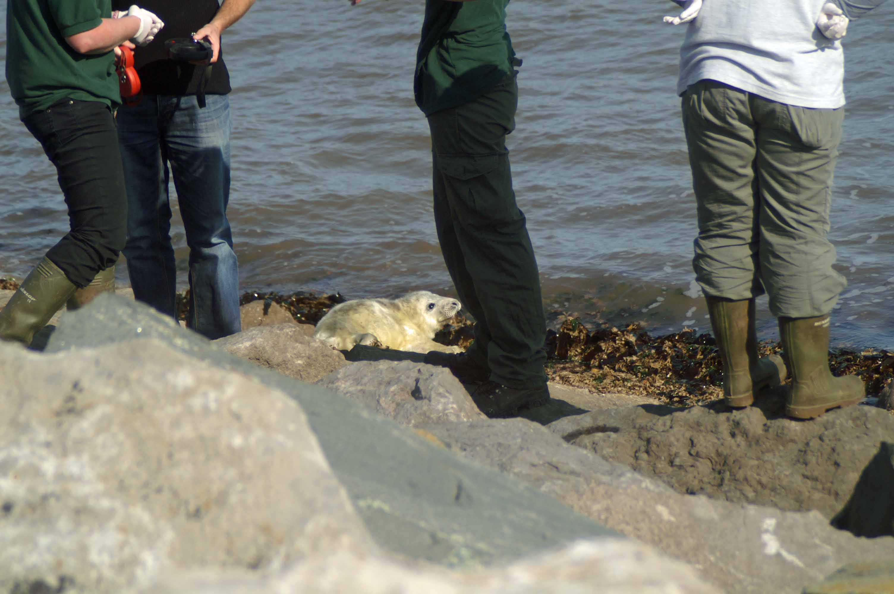 White Baby Seals On Seashore Everyday Nature Trails