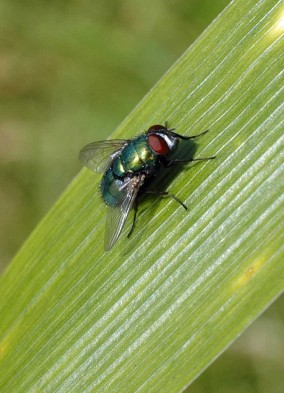 8/9/12-Greenbottle-Rhos-on-Sea garden