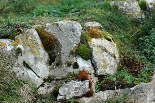 Rocky outcrop with cushions of moss