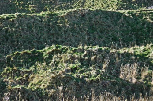 Textured grass terraces
