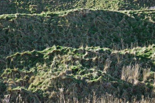Textured grass terraces