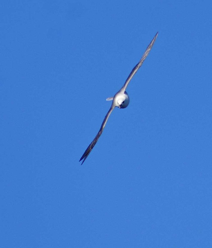 Head on the Fulmar is sleek and has a blade-like profile