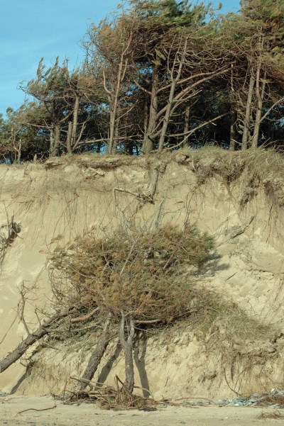 Significant erosion of the sand dunes