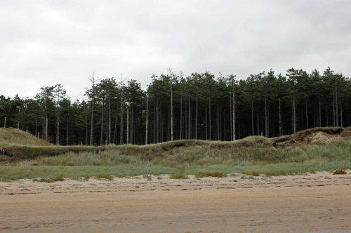 2012-9-15-Newborough beach-dunes & pine trees