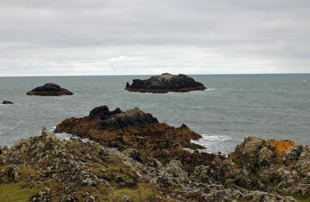 There is a breeding colony of Cormorants here, holding 1% of the total British population, many using the small rocky island of Ynys yr Adar (Bird Rock) off the tip of Llanddwyn