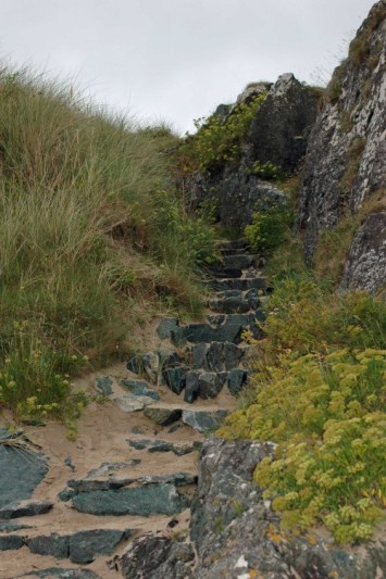 Steps cut into the rock, edged with Samphire