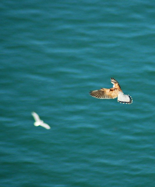 May 31st: Out over the sea, maybe using the gull to focus on