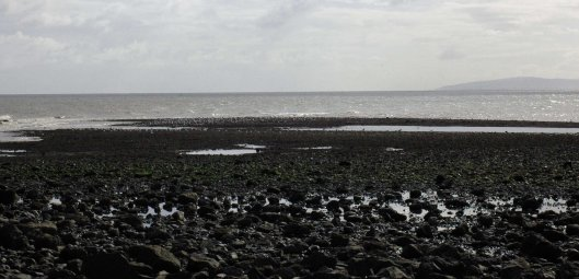 View across the mussel bed from the shore