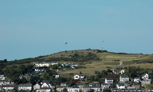 Buzzards circling Penrhyn Hill