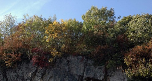 Quarry-field cliff crowned with autumn colours