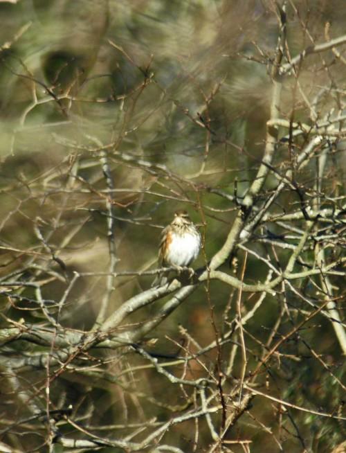 150104TGBRD-Kitchen view 12- Sparrowhawk