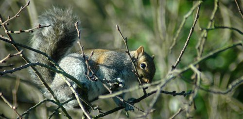 One of the squirrels nibbling on a twig