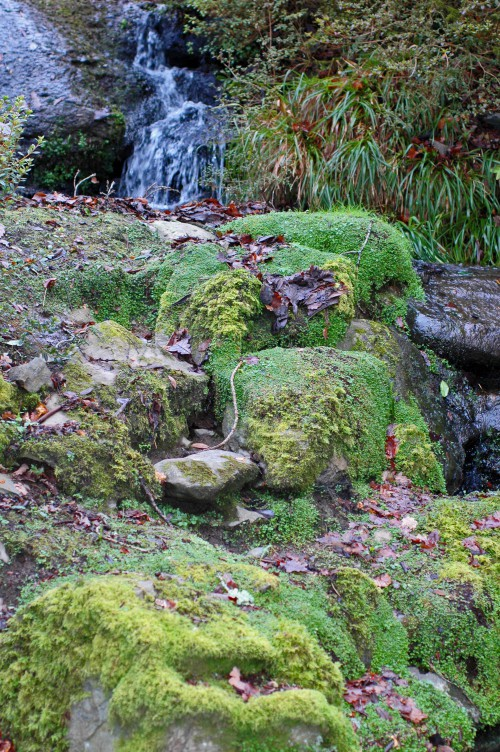 150120TG-Bodnant 21-Mossy stones by water