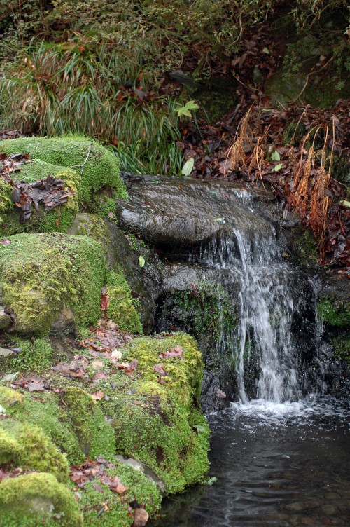150120TG-Bodnant 22-Mossy stones by water