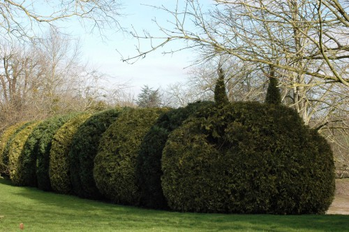 A yew topiary in the form of a caterpillar