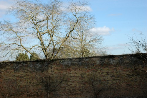 Part of the very high old brick wall surrounding a kitchen garden