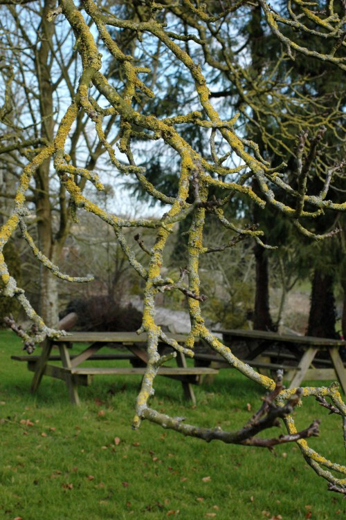 Picnic tables through lichen-covered twigs