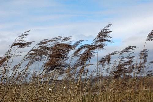 150218TGBR79-Reeds