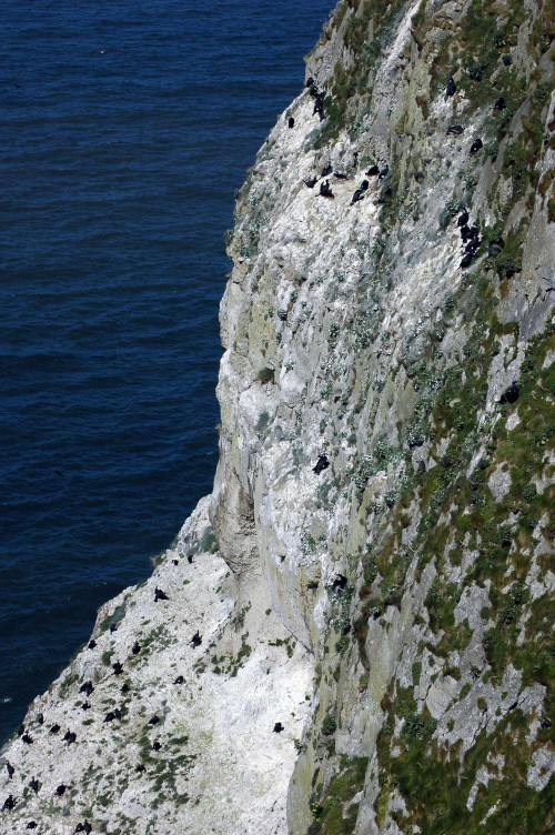 A view of the nest site on the almost-sheer cliff face