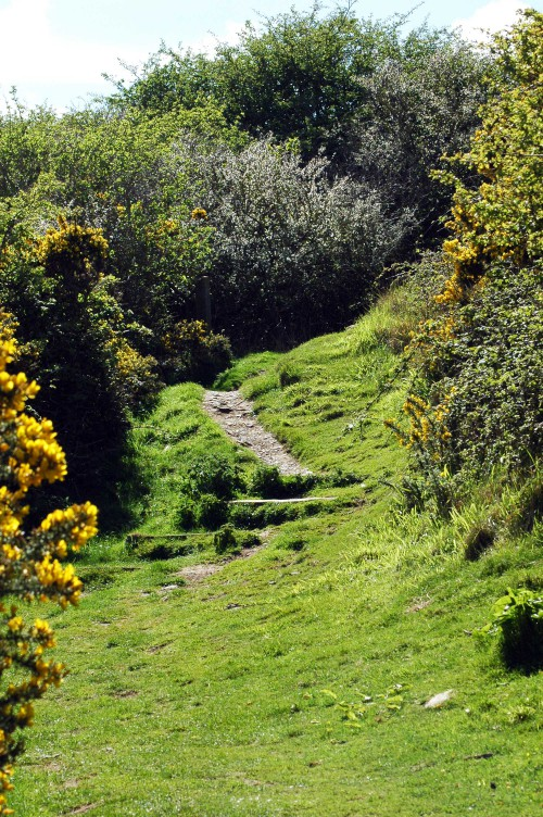 The  trail winds through a thicket of gorse and blackthorn