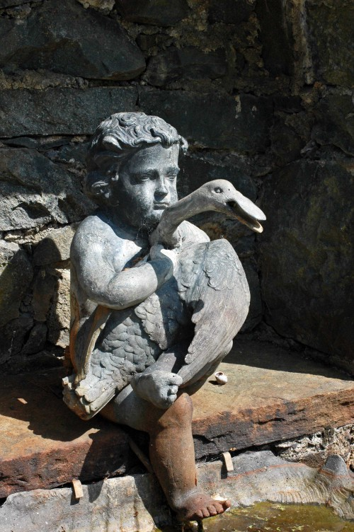 A determined boy holding onto an objecting swan
