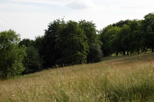 Long grass on the hillside of Alexandra Palace Park