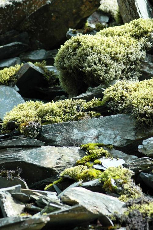 140826TGNW-Llechwedd Slate Mine (1)