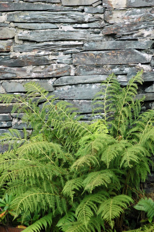And outside a beautiful fern softens the slate wall