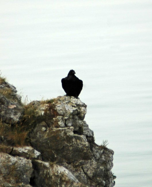 July- Raven looking out to sea