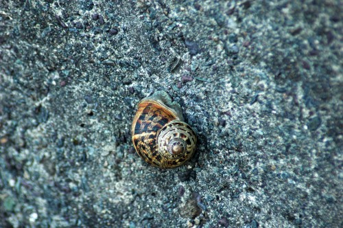 151007TGNW-15-Sea wall- Garden snail