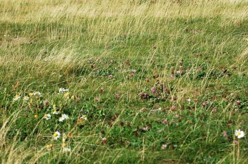 151007TGNW- Penrhyn Bay-grassy patch
