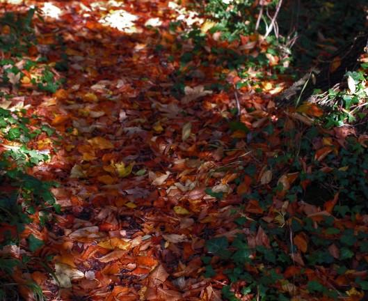 151021-Bryn Euryn Woods 5a-Path leaf-strewn
