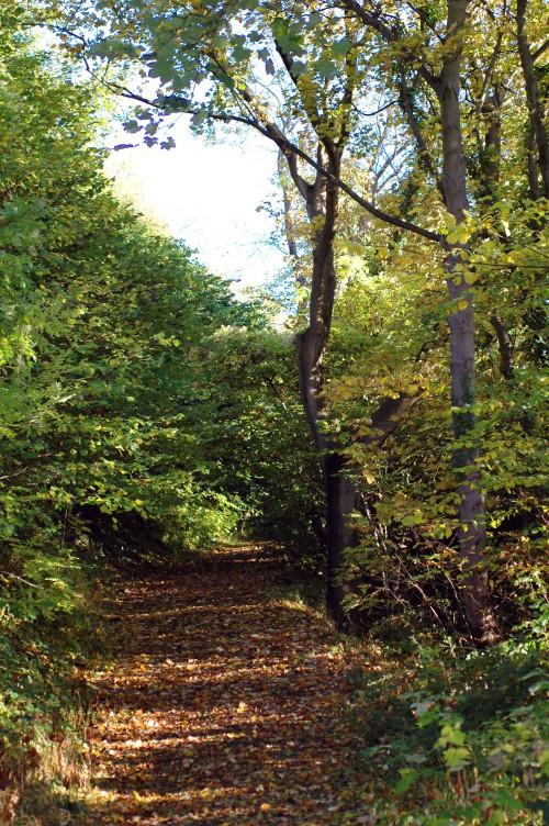 151021-Bryn Euryn Woods 8a-Woodland Trail
