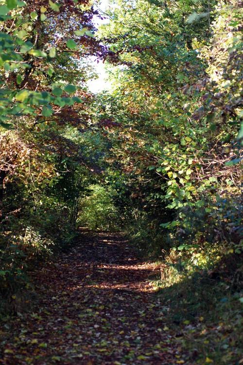 151021-Bryn Euryn Woods 9a-Woodland Trail
