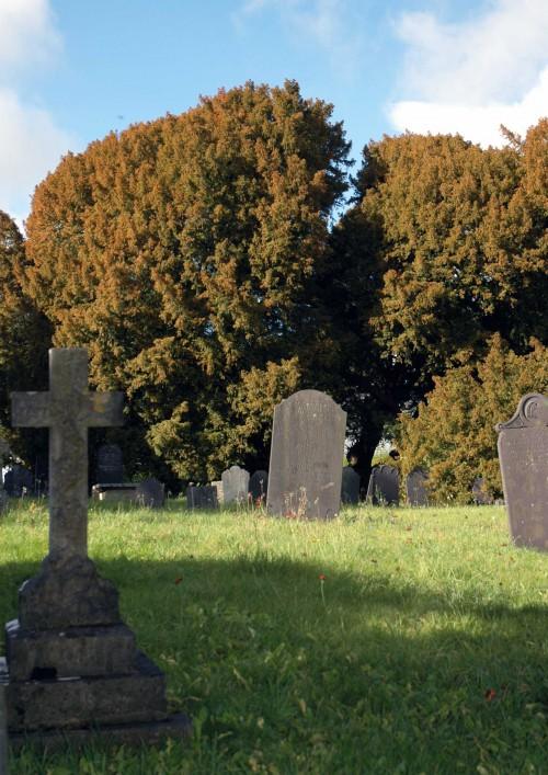 151022-Llangernyw-Ancient Yew 4a