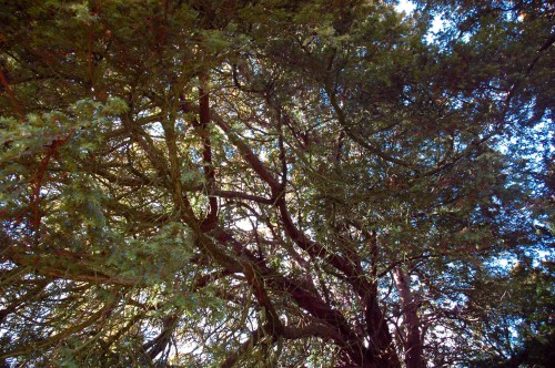 Looking up into the canopy