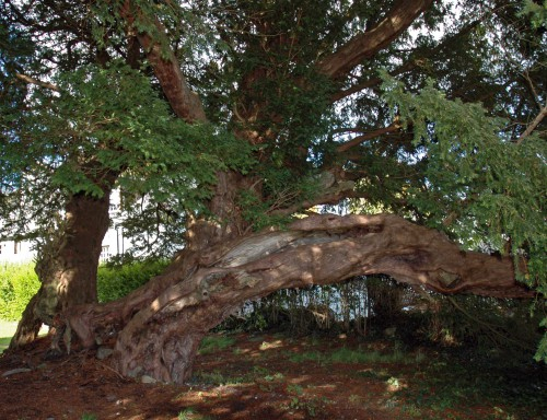 The fragmented trunk of the tree