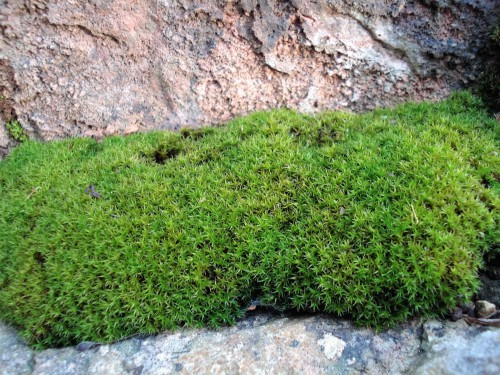 A cushion of moss tucked against rocks