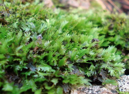 Close-up of moss