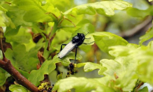 160509-Bryn Euryn-St Mark's fly 1