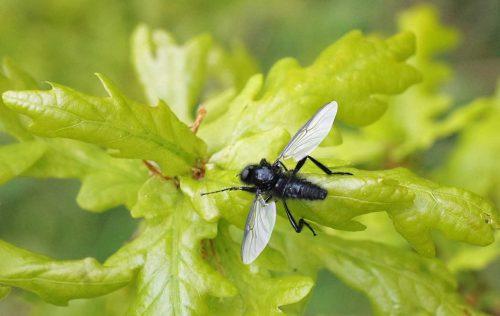160509-Bryn Euryn-St Mark's fly 6