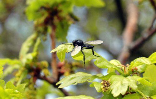 160509-Bryn Euryn-St Mark's fly