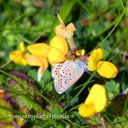 160714-GO-Silver studded blue underside (s) 3