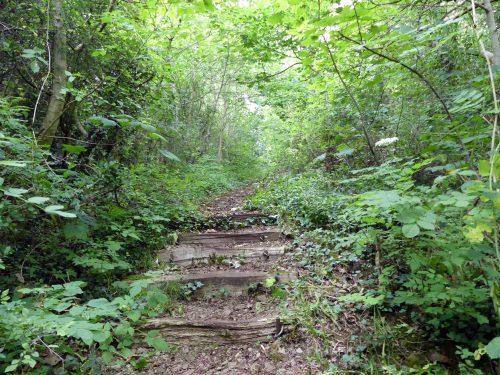 160805-Bryn Euryn (23)-steps up to field
