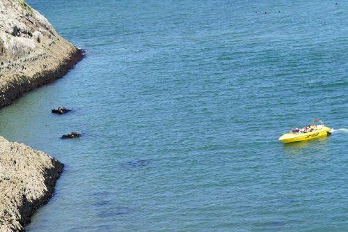 160826-LORC41-Boat approaching seals