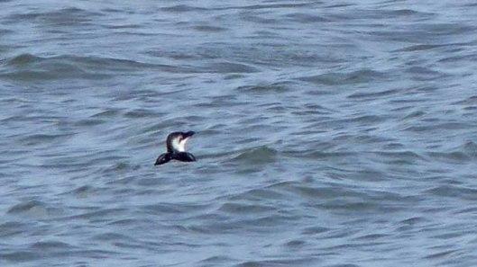 160910-rprc-rhos-point27a-diver