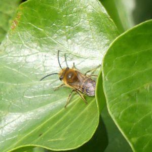 161004-rosrc-ivy-bee