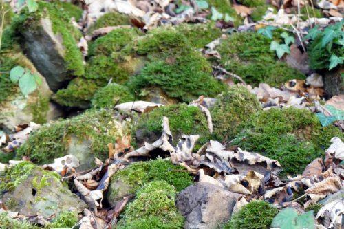 170102-berc-22-mossy-stones